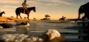 Herding Cats - EDS Commercial